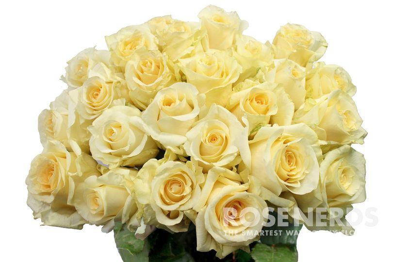 Wholesale cream roses