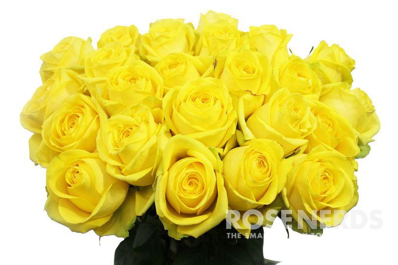 Wholesale yellow roses