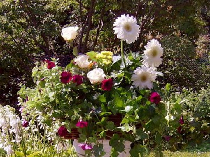Tmx 1347481323627 Floralaccentsceremony1whitegerbsrosesonpetistal North Tonawanda wedding florist