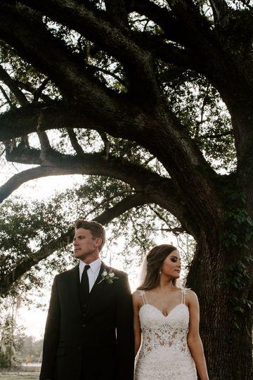 The Majestic Oak Tree