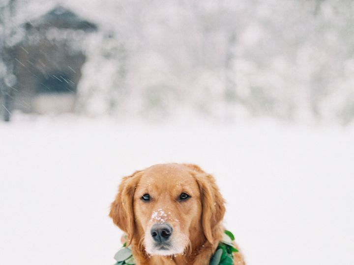Tmx 1506866928655 Dog Collar   Callie Hobbs Photography Denver, Colorado wedding florist