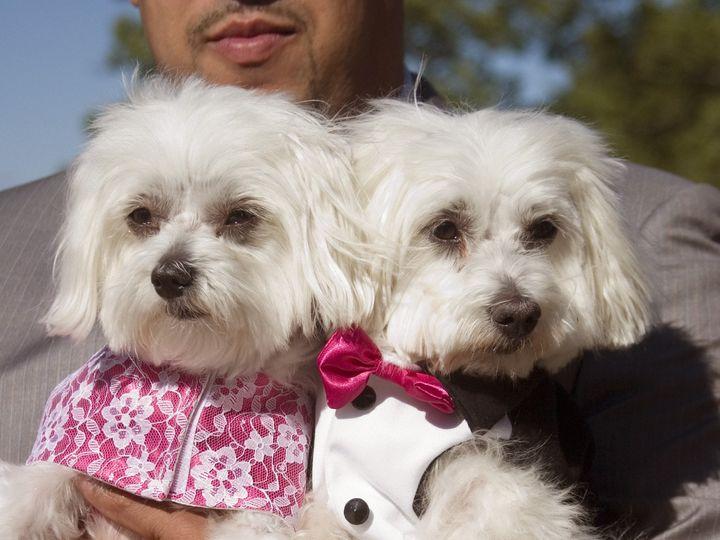 Tmx 1450374127968 Princess Dogs Millwood, NY wedding planner