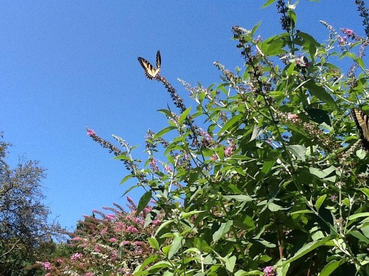 Tmx Sm Butterfly Sanctuary 51 64161 157825135449516 Lovettsville, VA wedding venue