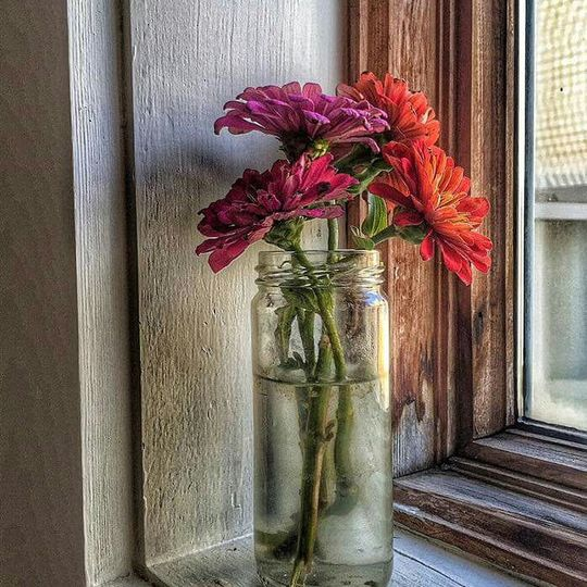 Flowers by the windowsill