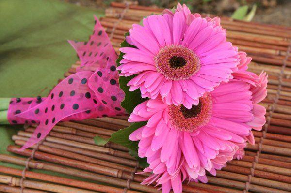 Tmx 1228780886534 IMG 3456 San Luis Obispo, California wedding florist