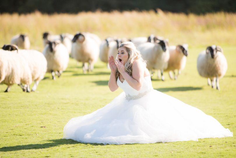 sheep lana 51 85261 1568231304