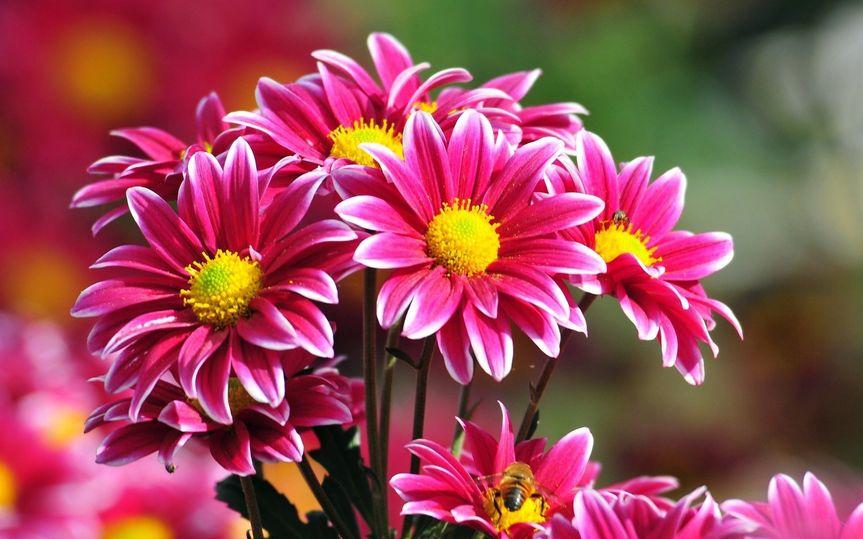f2cd96ca970f914b 1465396891505 flowers 07 1