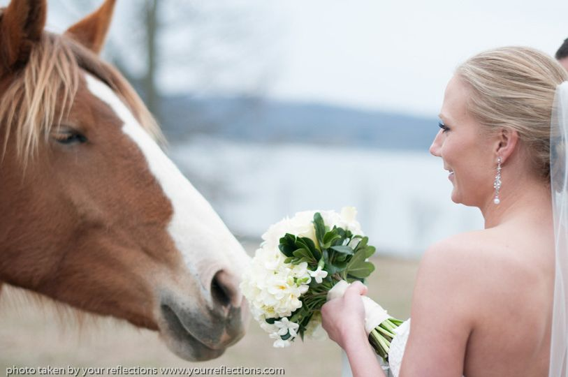 The bride and a horse