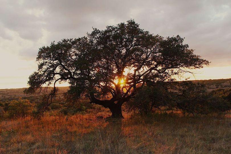 Sunset on the ridge.