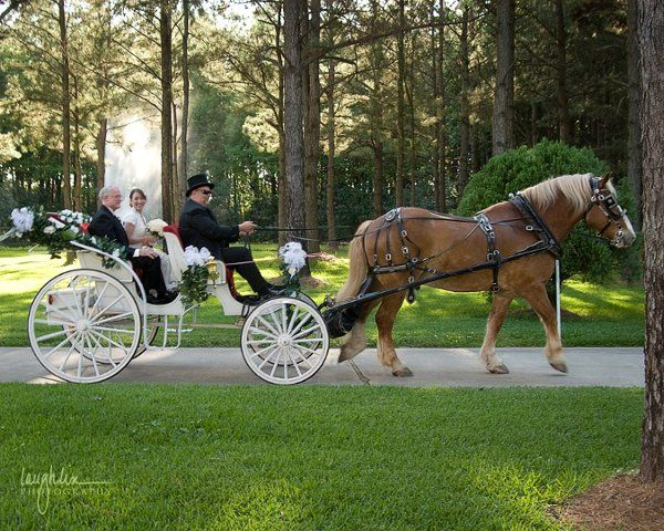 Bubba and Victoria horse drawn carriage