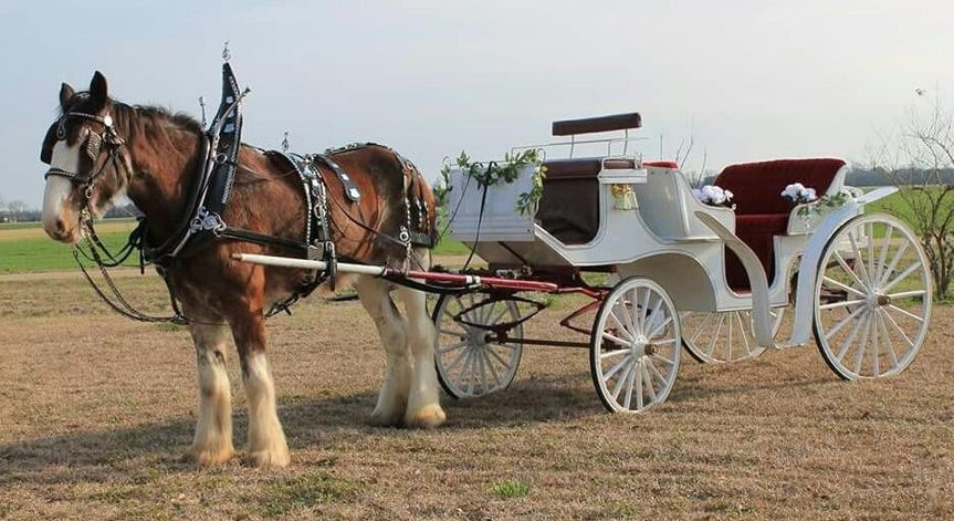 horse and carriage2 51 1066761 1558283642