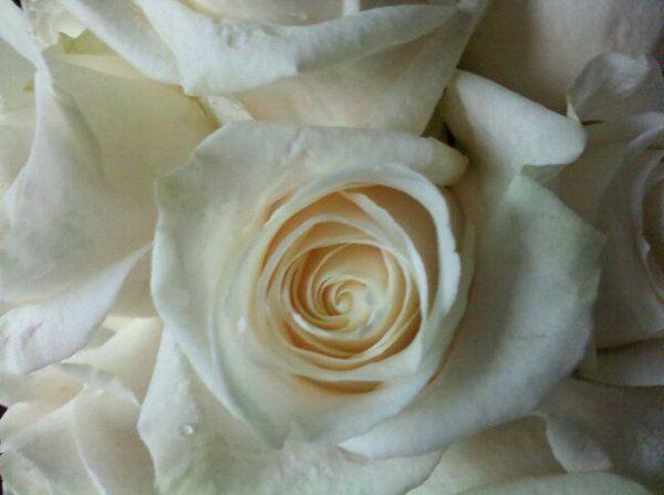 Allwhiteweddingflowers