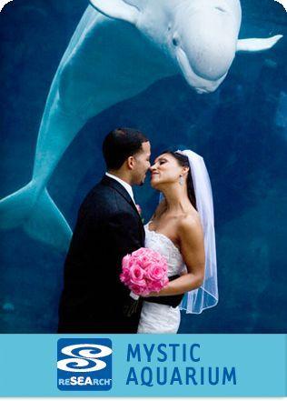 218aba7ebd7da37b HomePg Aquarium