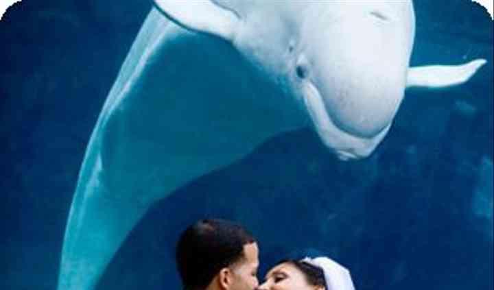 Mystic Aquarium / Ocean Blue Catering
