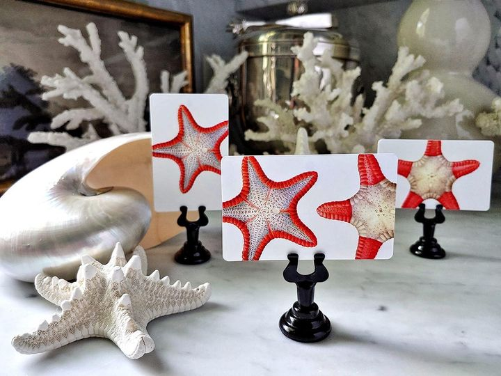Tmx Mr Ps Place Cards Bicolor Starfish 6 51 1861071 1566674848 Old Chatham, NY wedding invitation