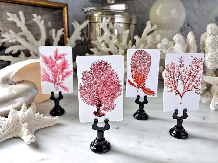 Tmx Mr Ps Place Cards Red Seaweed Coral 5 51 1861071 1566674684 Old Chatham, NY wedding invitation