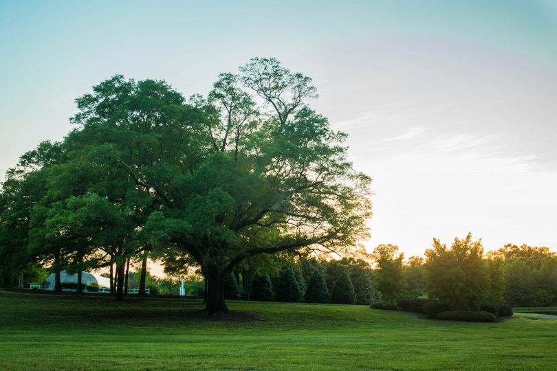 Lush green surroundings