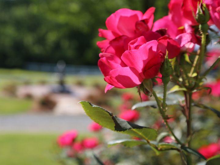 Tmx 1466986211799 Camellia Roses Monroe, NC wedding venue
