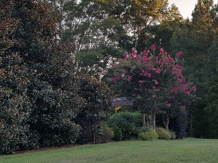 Tmx 1476205916933 Camellia Crepes Monroe, NC wedding venue