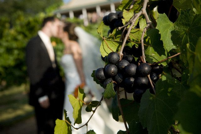 Muscadine Grapes in View