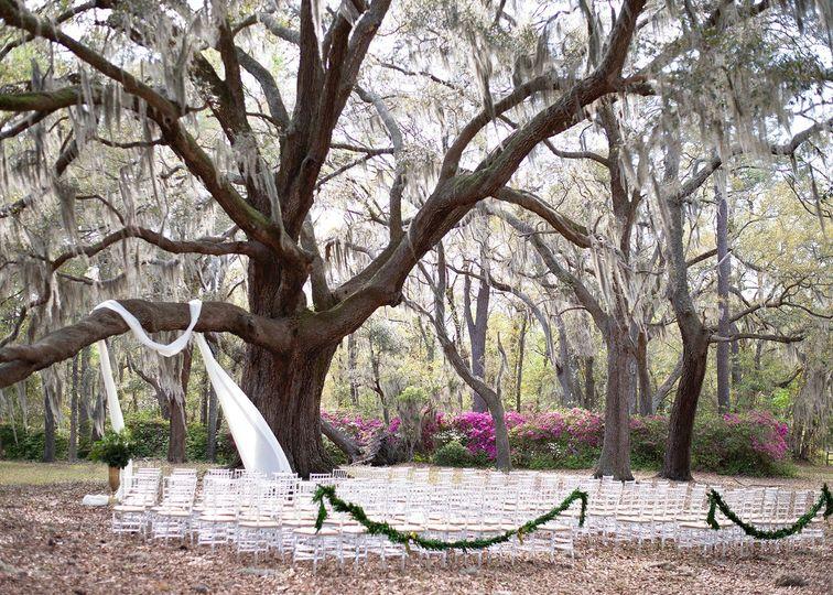 hewitt oaks swooning tree background 51 1904571 157914956871124