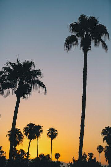 colony 29 wedding palm springs 3002