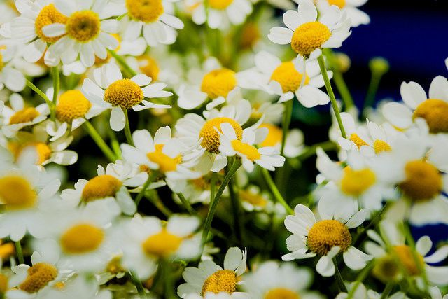 Daisies are my favorite!
