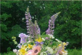 Hyde Park Flowers