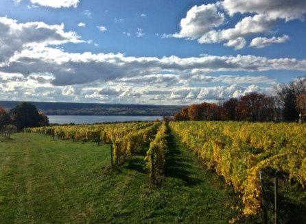 Treleaven Vineyards