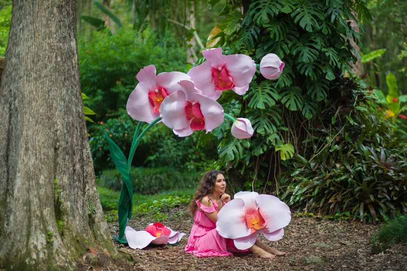 Giant orchid