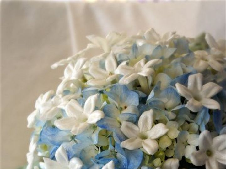 Tmx 1332889601168 Bluehydsteph Minneapolis, Minnesota wedding florist