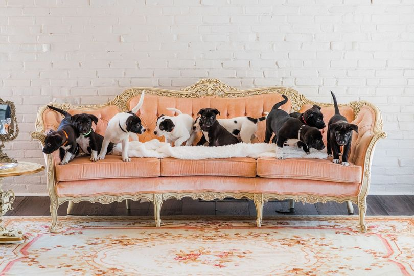 Vintage Pink Couch