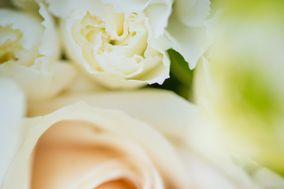 J D Elegance Photography