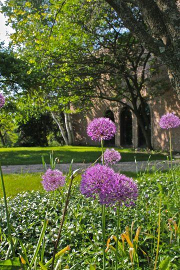 purple flowers outside