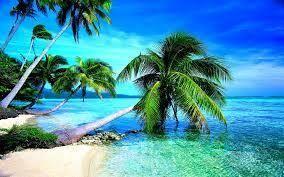 9d971fc58765dbb4 beach palm tree
