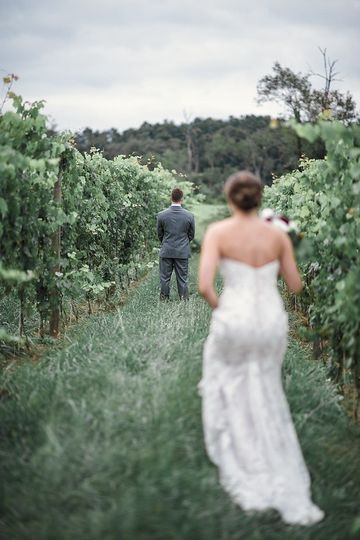 First Look in the Vines