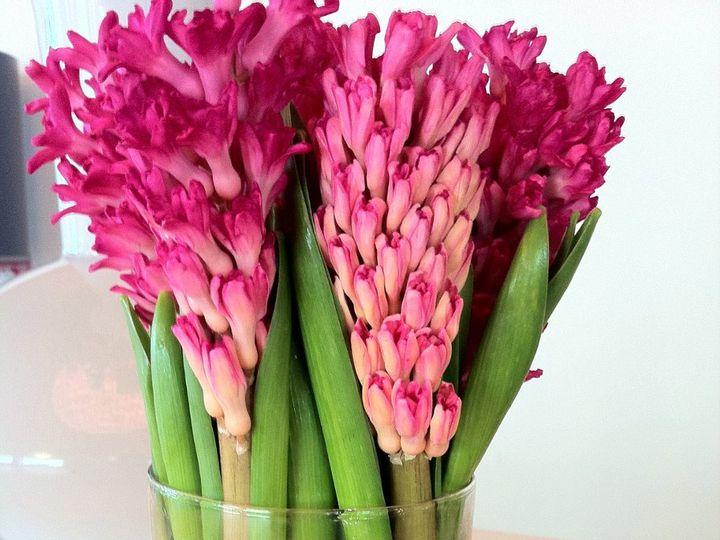Tmx 1341326959859 IMG1237 Chatham wedding florist