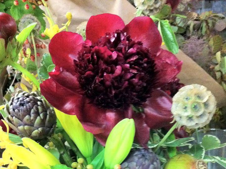Tmx 1341327332868 IMG1391 Chatham wedding florist