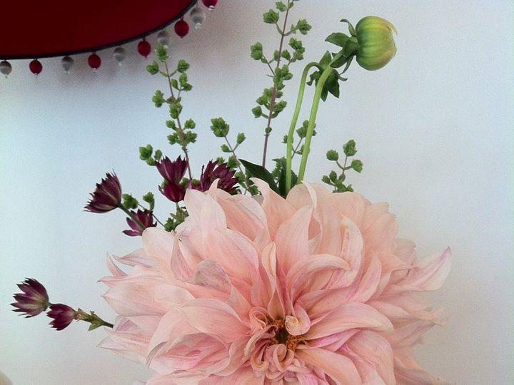 Tmx 1341327480798 IMG2724 Chatham wedding florist