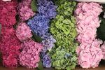 Springfield Wholesale Flowers image
