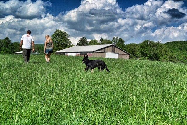 Strolling through lush fields