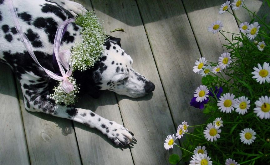 Dog with florwers