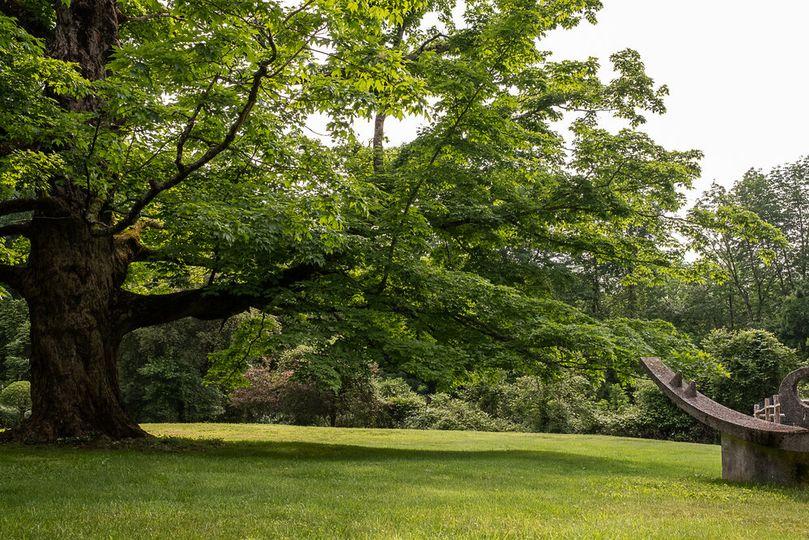 Field of Tree of Life