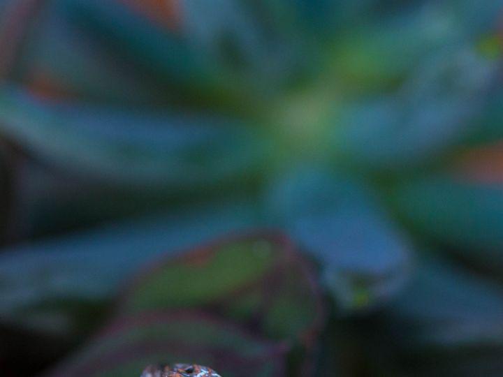 Tmx Delicate Edwardian Ring 2 51 145102 1556820476 San Luis Obispo, CA wedding jewelry