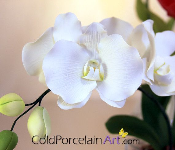 Tmx 1404246333507 Cold Porcelain Art   Centerpiece   White Orchids 1 Ankeny, IA wedding florist