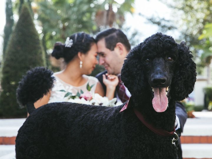 Tmx Asian Wedding Couple Photos With Dog Alfond Inn 7573 51 123202 1572932545 Orlando, FL wedding photography