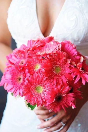 Hot pink gerbera daisies