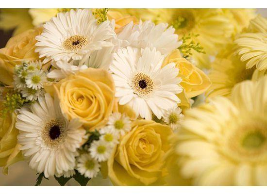 Tmx 1294848989847 4 Geneseo wedding florist