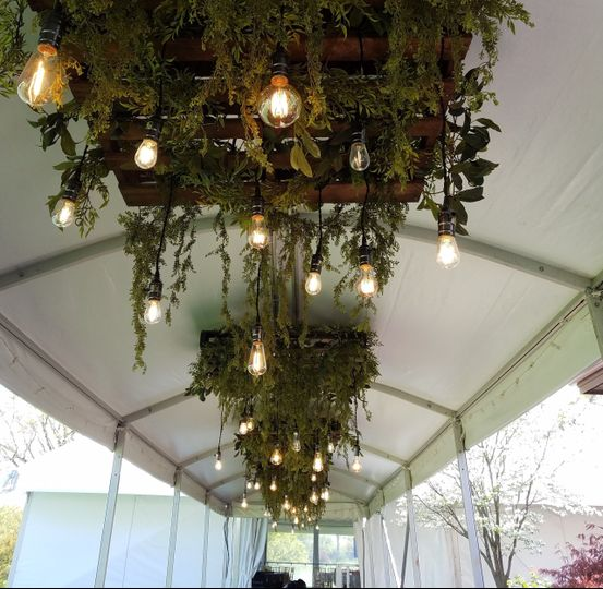Plant decor and hanging lights
