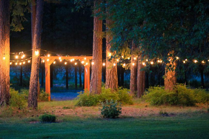 Warm lights in Pine Trees